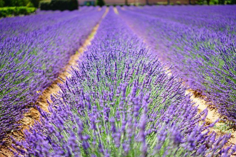 Caminhos e descaminhos na França, O que fazer na região de Provence