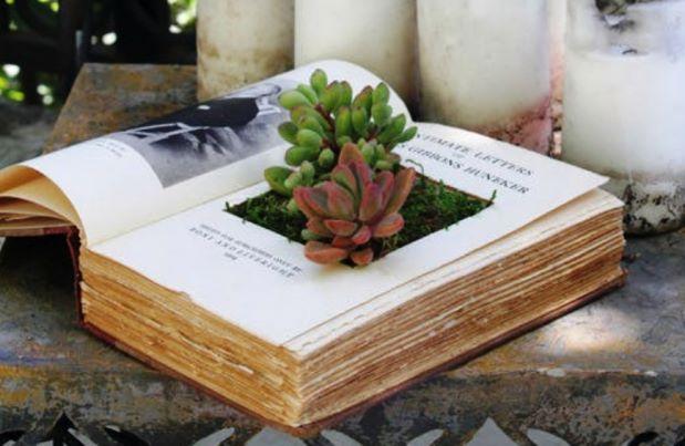 Plantas suculentas, livros antigo