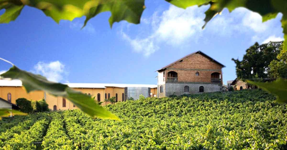 Tudo sobre vinhos - Casa Valduga