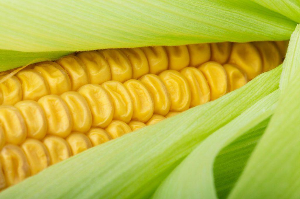 Segunda sem Carne: Aprenda a fazer creme de milho