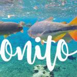 Bonito um dos melhores destinos de Ecoturismo do País.