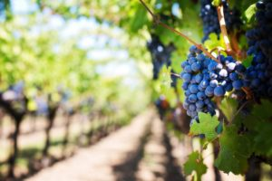 Suco de Uva no Nordeste, vinhos nacionais finos