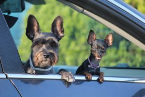 Transporte irregular de pets