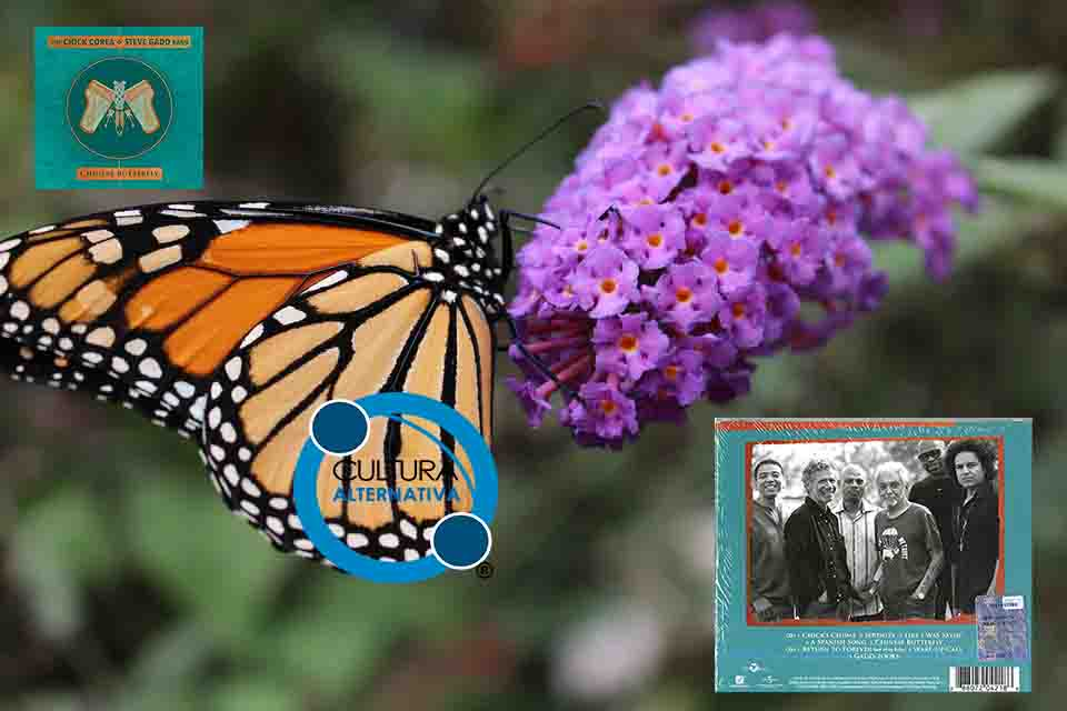 Chinese Butterfly. Chick Corea e Steve Gadd.