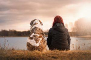 Animal de estimação, doenças comuns de outono