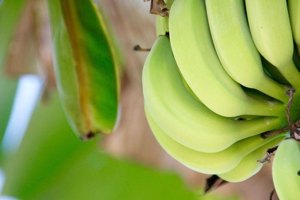 Banana-verde
