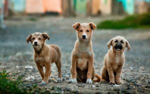 Mutilação em pets