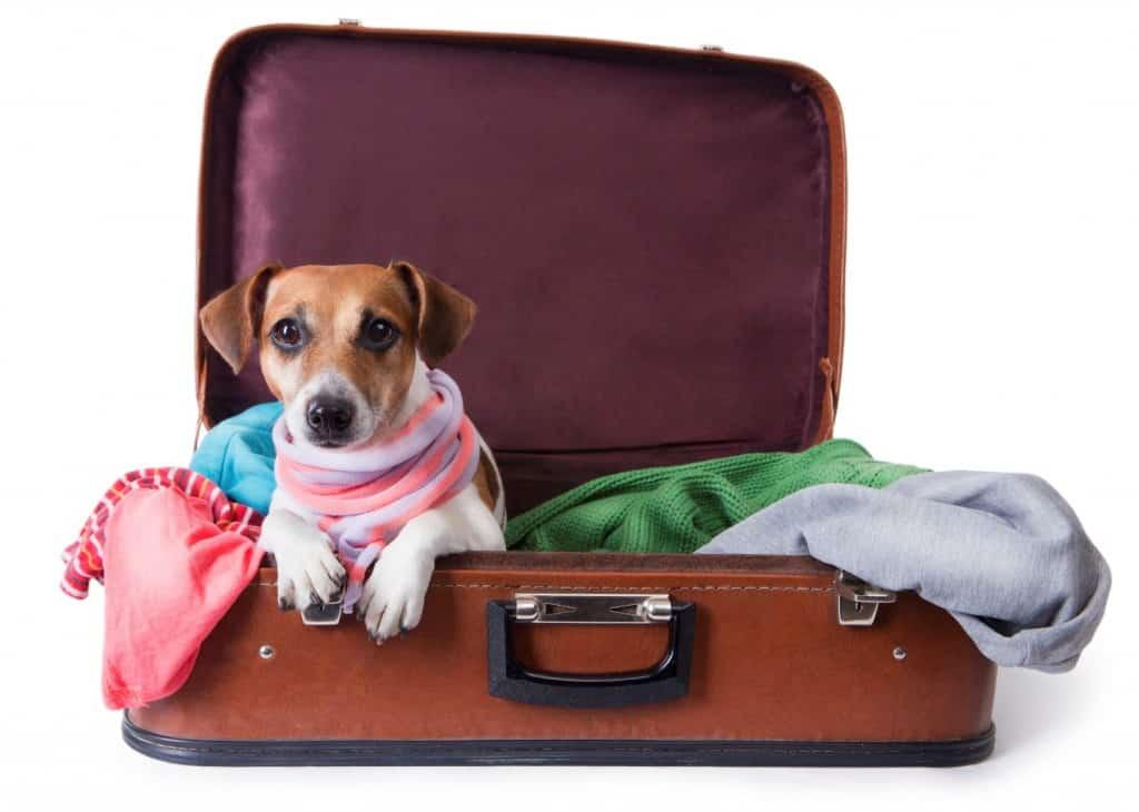 Cuidados para viajar com o Pet