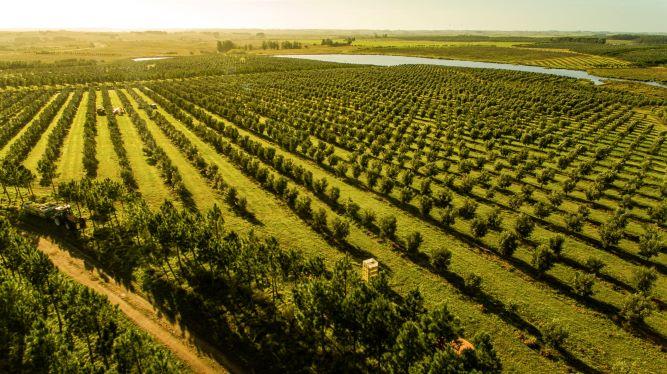 Fazendas de azeite