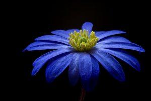 Flor Azul Galanteios