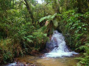 Parques e outros santuários naturais