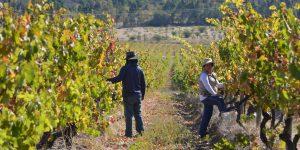 Dia do Vinho Chileno