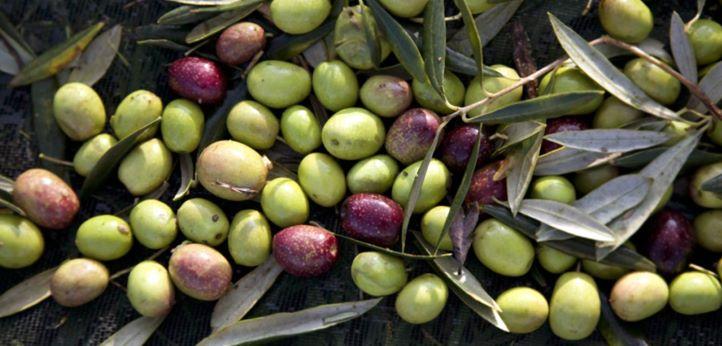 O olivoturismo e o azeite alentejano