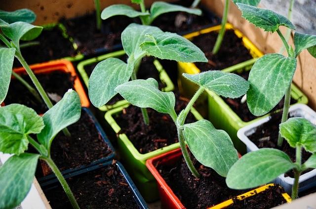 Cultivar o próprio alimento