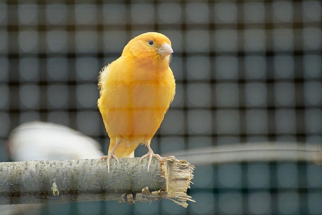 Aves pet